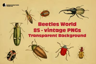Vintage-85 Beetles