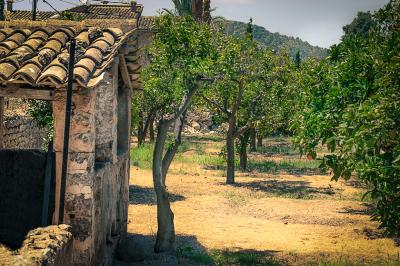 Orange Tree Farm
