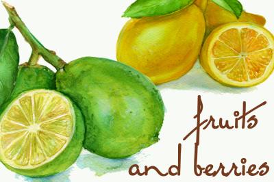 set of 22 watercolors of fruits