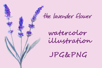 Flowers lavender. Watercolor
