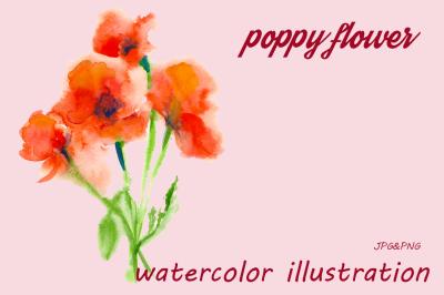 Flowers poppy. Watercolor