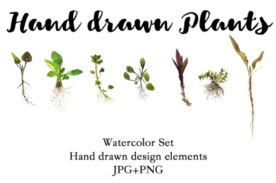 Hand Drawn Plants