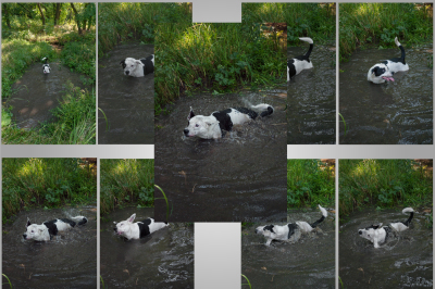 Dog found in the woods a dirty pond and bathed there. A series of eight photos, JPEG 300 dpi.