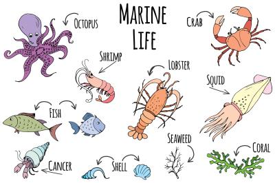 Set doodle marine life