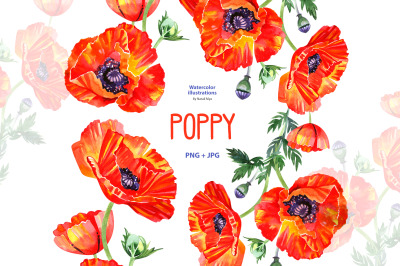 Watercolor poppy - floral clipart