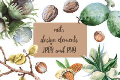 nuts. design elements