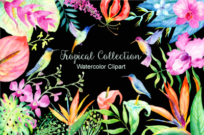 Watercolor Clipart Tropical Collection