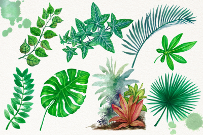 Watercolor Tropical Leaves in the Jungle