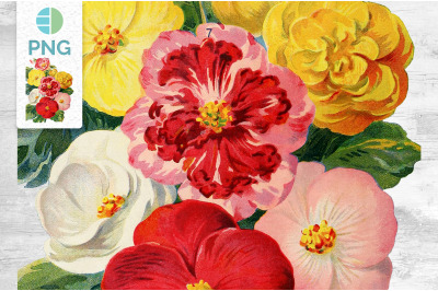 Bouquet Begonia Clipart