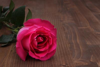 rose on wood background