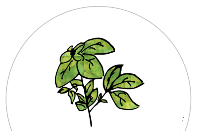 Basil Gardening Labels