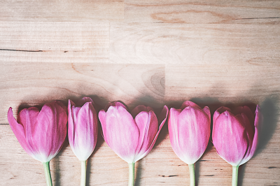 Pink Tulips on Wood V.2