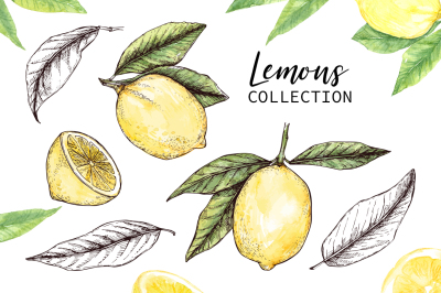 Lemons set. Hand drawn and watercolor collection