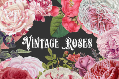 Vintage Pink Roses Clipart & Brushes