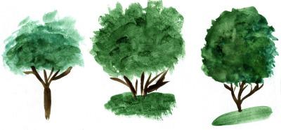 Watercolor trees. vector+jpg