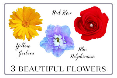 3 Beautiful Flower Photo Cutout Clipart