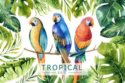 Tropical set I
