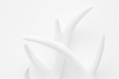 White on White Antlers