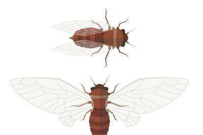 Flat cicada illustration