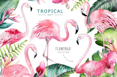 Tropical set II. Flamingo collection