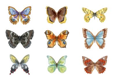 9 watercolor butterflies (PNG + VECTOR)