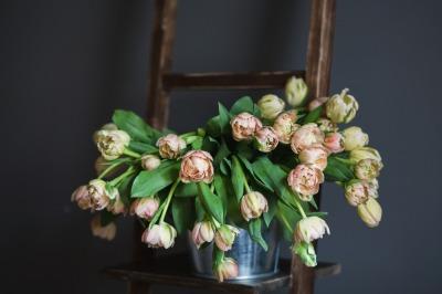 Nude tulips in metal bucketful