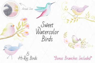 Sweet Watercolor Birds