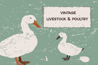 Vintage Livestock & Poultry