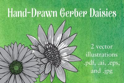 Gerber Daisies Vector Illustration