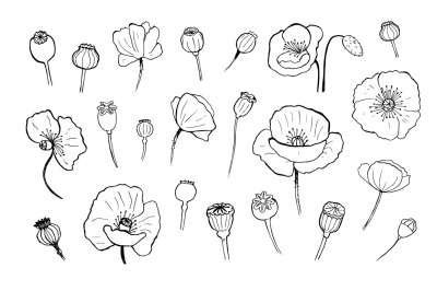 Vector poppies