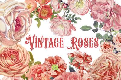 Vintage Peach Roses