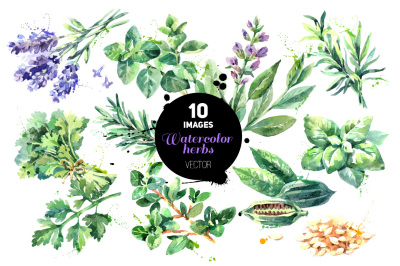 Watercolor Hand Drawn Herbs Vector Set