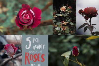 5 HQ photos of Roses Bundle - 300 DPI, JPG