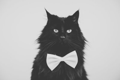 Black Cat with a Bow Tie