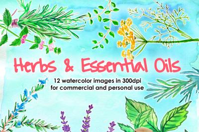 Watercolor Herbs Lavander Essential Oils bundle watercolor boho watercolor menta rosemary basil