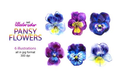 Watercolor pansy illustrations