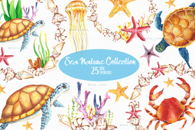 Underwaters sea seashells summer clipart