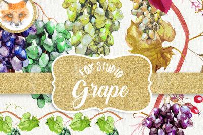 Watercolor Grapes Clipart, Grape Vineyard Clip art, Wine Grapes, Fruits Clip art, Illustrations, Watercolor Elements