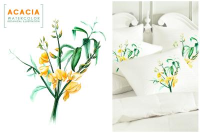 Yellow acacia. Watercolor botanical.