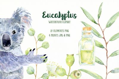 Watercolor Clip Art Eucalyptus