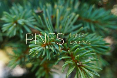 Pines Light & Pines Light Italic