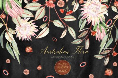 Australian Flora. watercolor clipart
