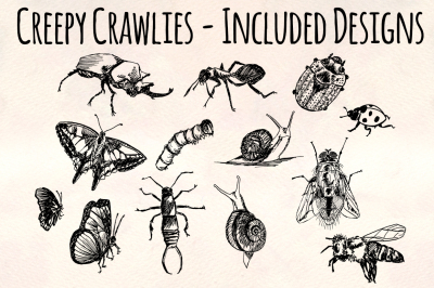 Insects and Creepy Crawly Bugs Vector Bundle