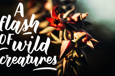 Wild Creatures | a brush font