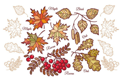Autumn leaves. Fall. Design elements.