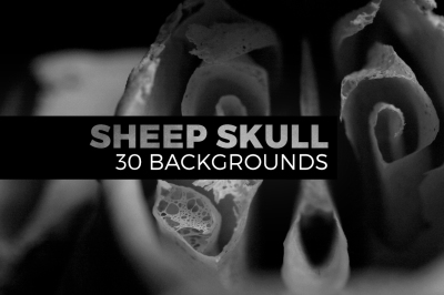 Sheep skull abstract pictures