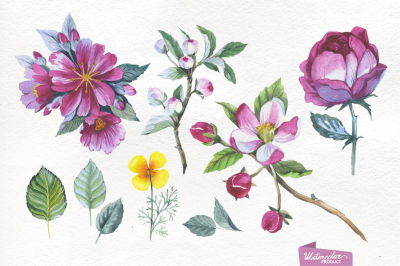 Apple blossom PNG flowers watercolor