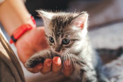 Funny kittens photo bundle