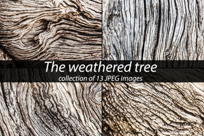 Weathered tree, photo collection
