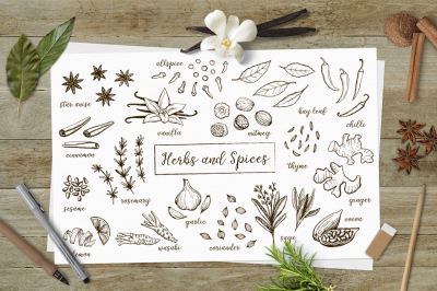 Herbs and spices sketches. Vector and clipart.